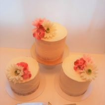 Vegan Tasting Cake $55 to $65 each (click on MORE to see full flavours list)
